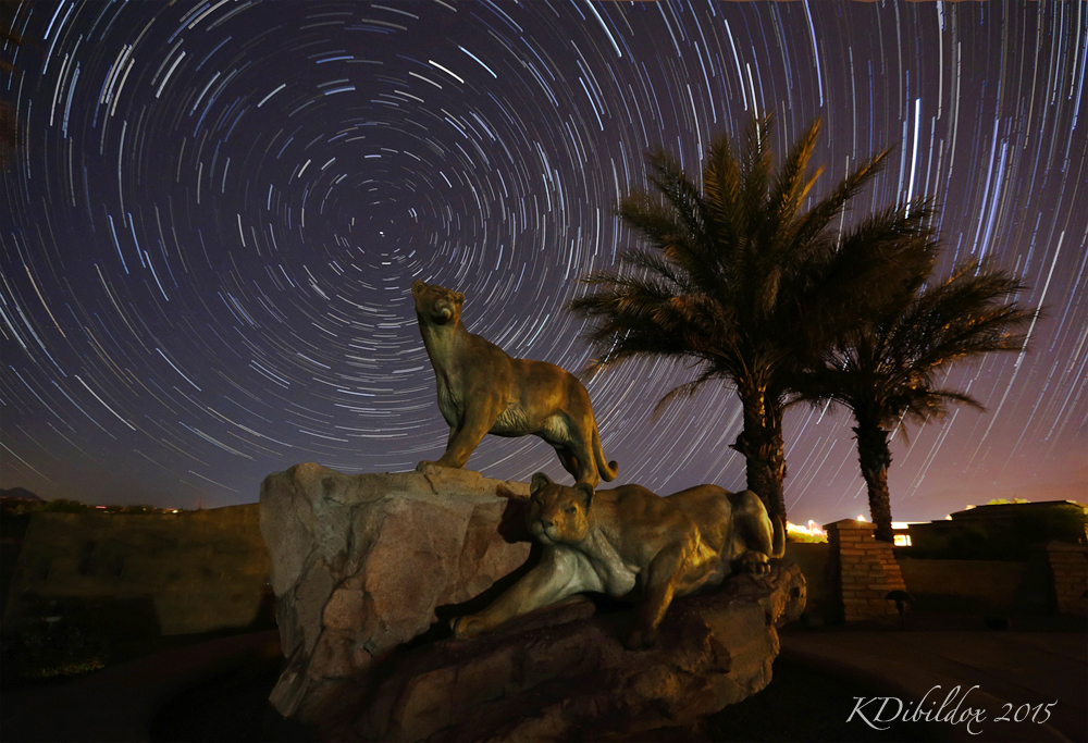 Mountain Lion star trails