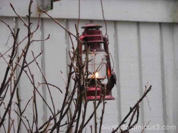 An oil lantern sets the tone!