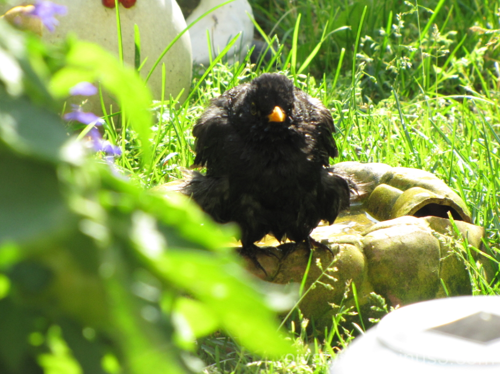 Blackbird is bathed in 3/3.