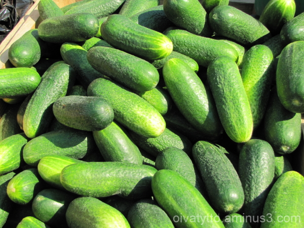Grown in the open cucumbers!