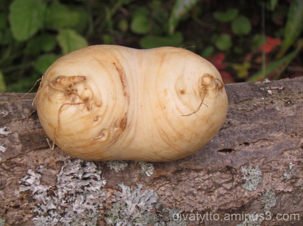 Turnip twins!