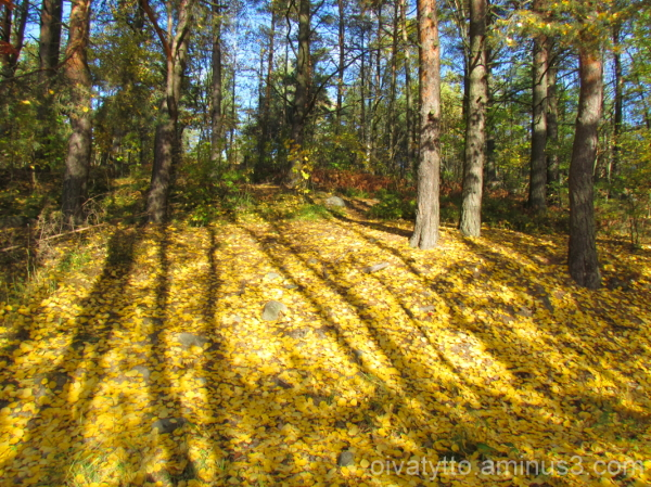 Autumn in the forest 3/7