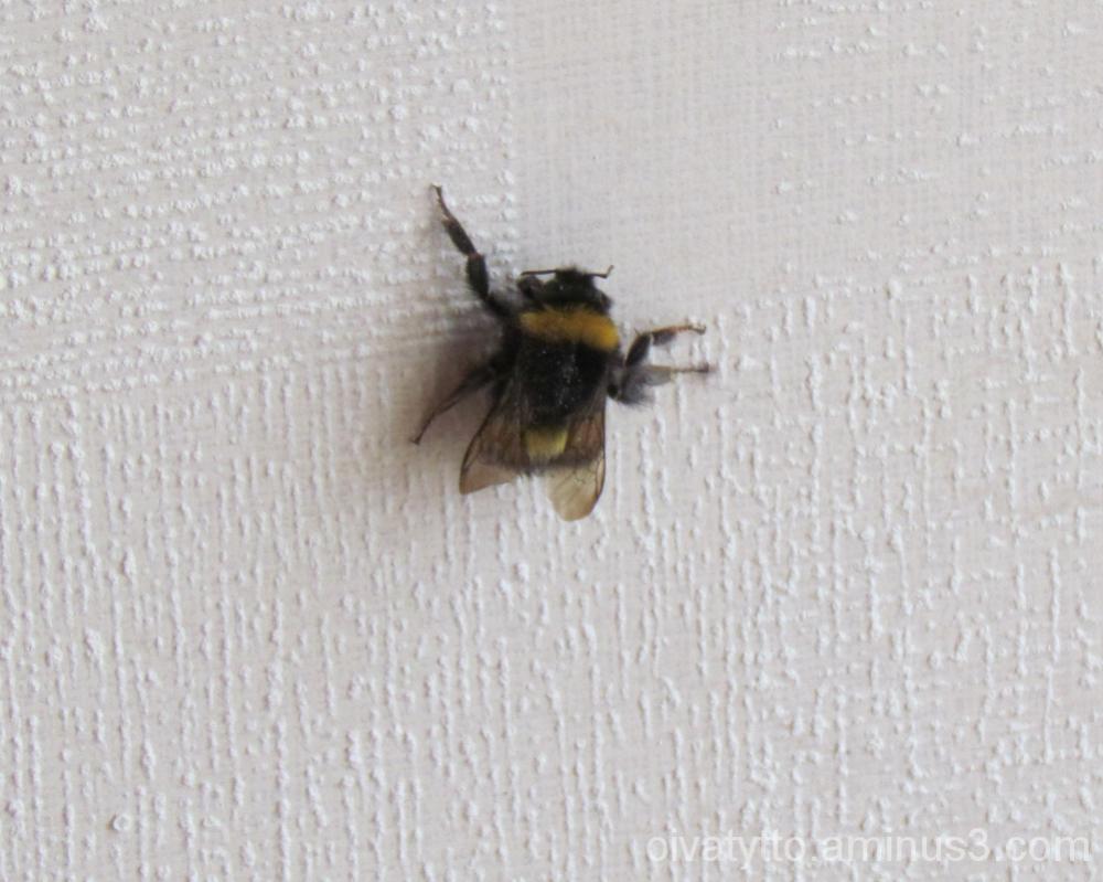 Honeybee!