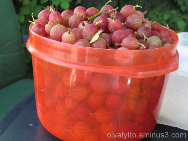 Gooseberries in the freezer!