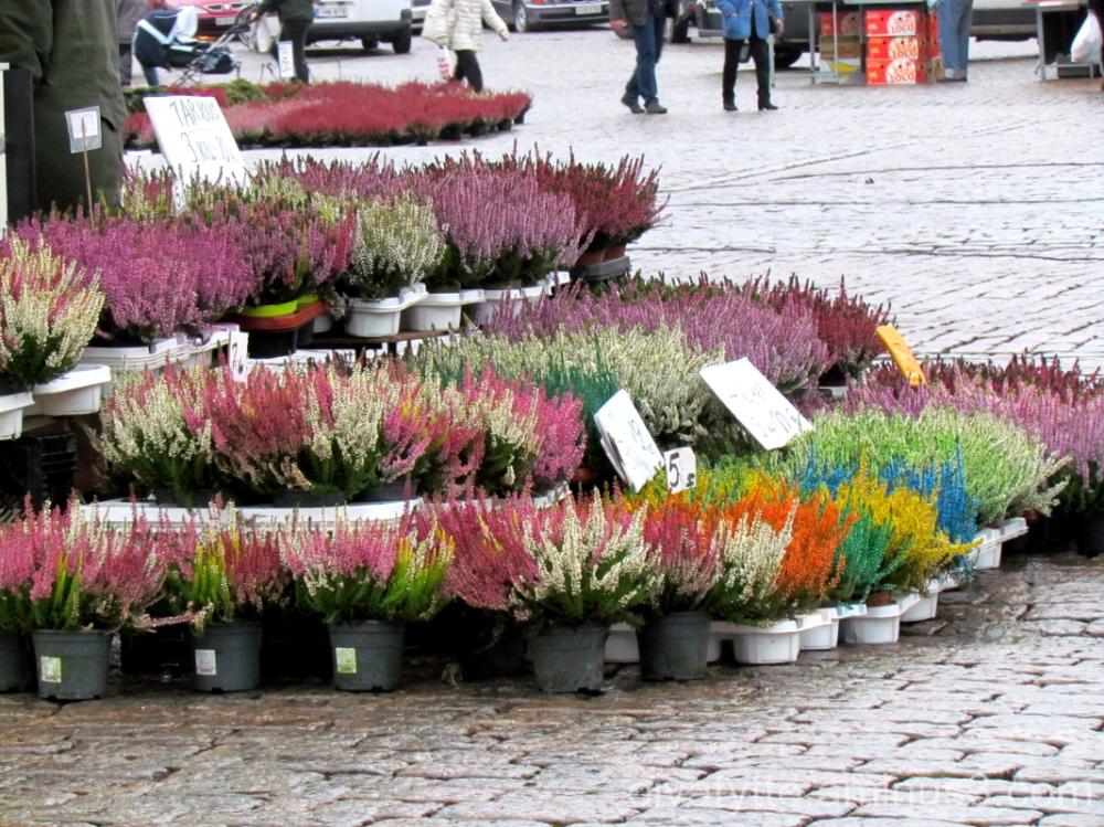 Flower colors range market!