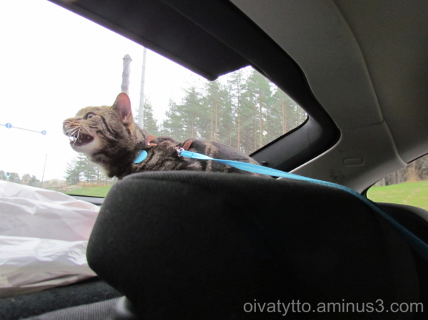 Somebody help me, I want to immediately out of car
