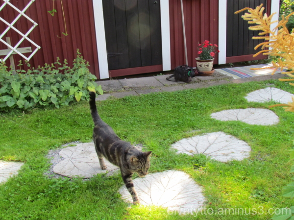 Heart path and Leevi.