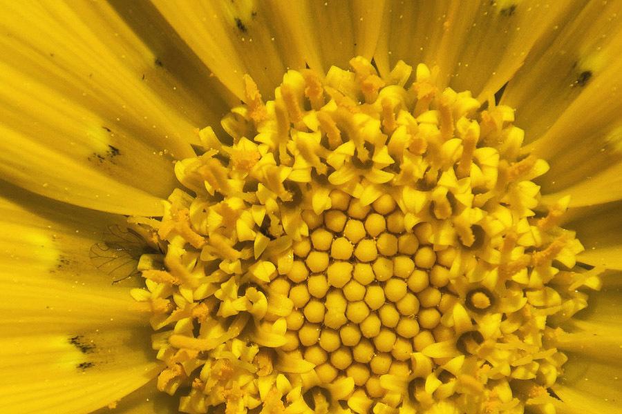 flower macro fly