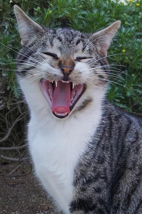 gatopolis garraf cat gato sillytuesday
