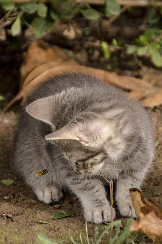 cat bee