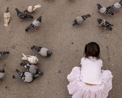 the pigeons and the flower