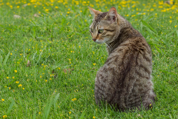 cat BW gato
