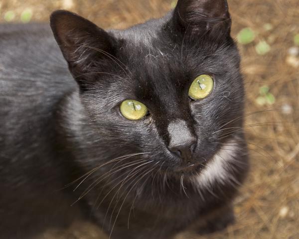 castelldefels canopolis gats