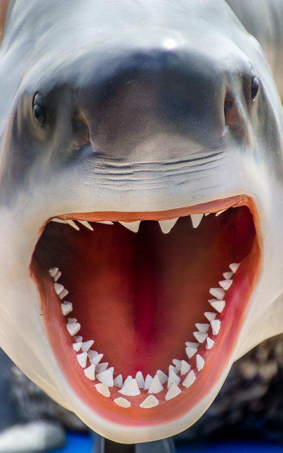 shark entertainment