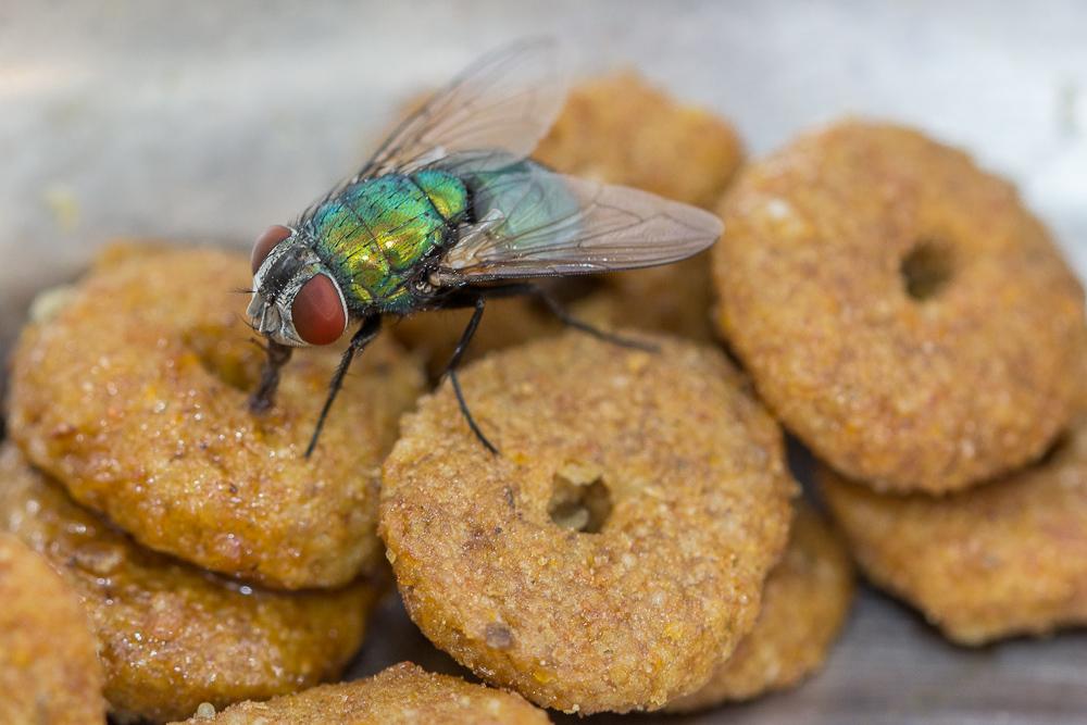 mosca fly macro