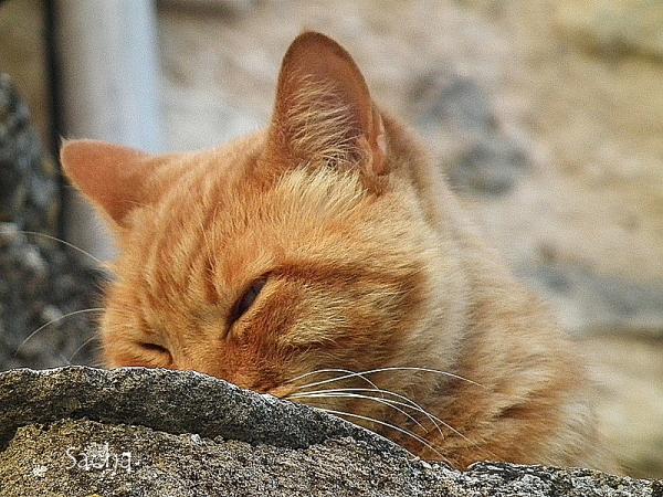 Le chat ..Pacha ! village de Goult Provence # 2