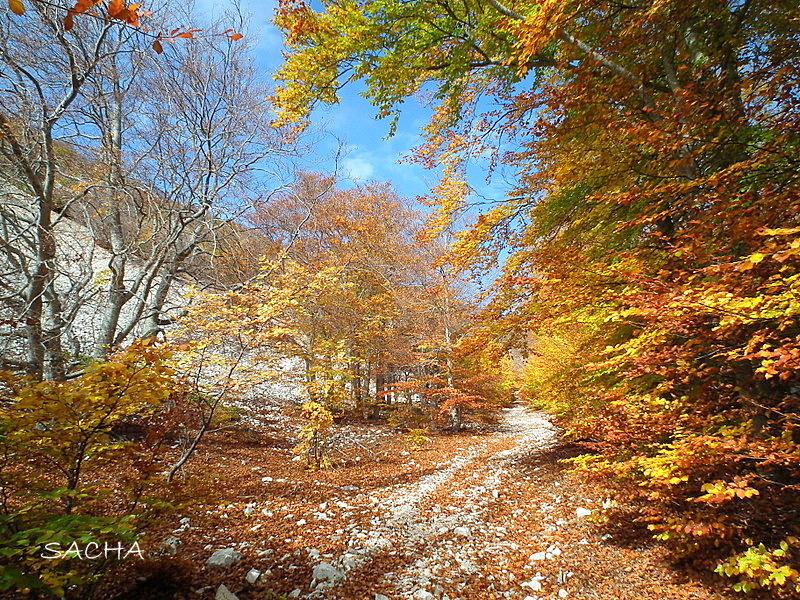 Combe Fiole en automne Ventoux