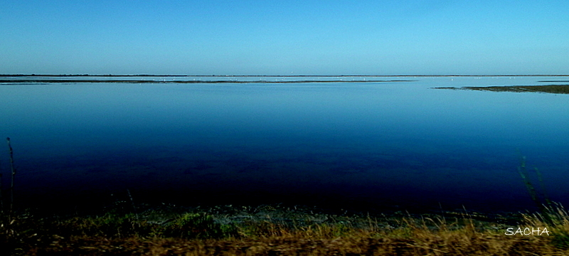 Camargue au petit matin