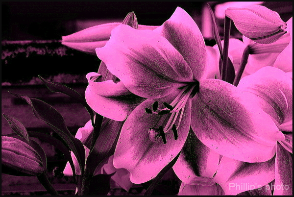Flowers For Bruce # 5