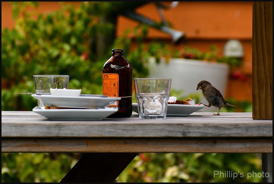 A cheeky bird.