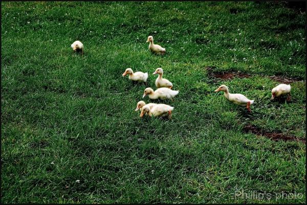 Walk around a Farm Park. #2