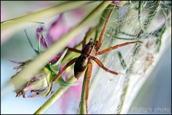 Strange Spider.