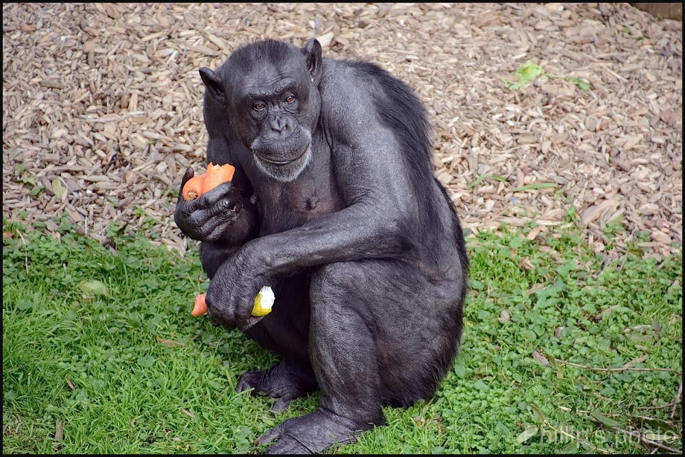Hamilton Zoo #29