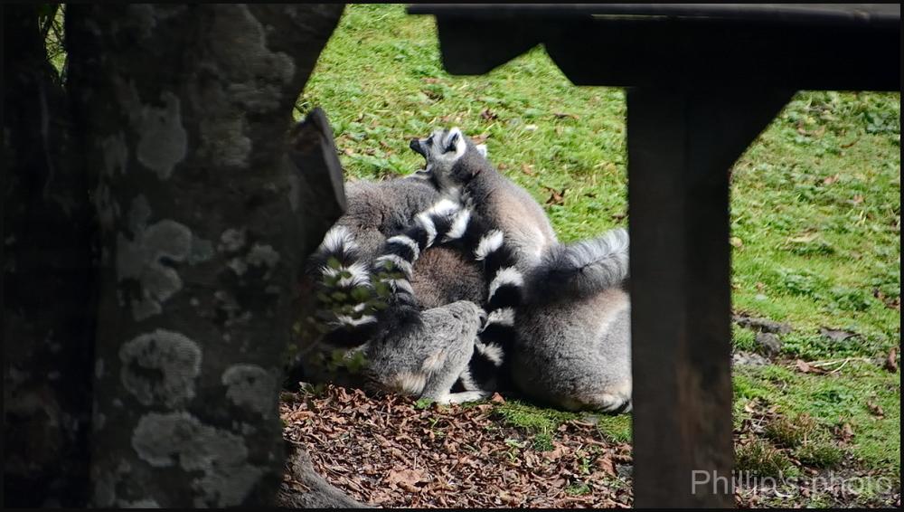 Hamilton Zoo #35
