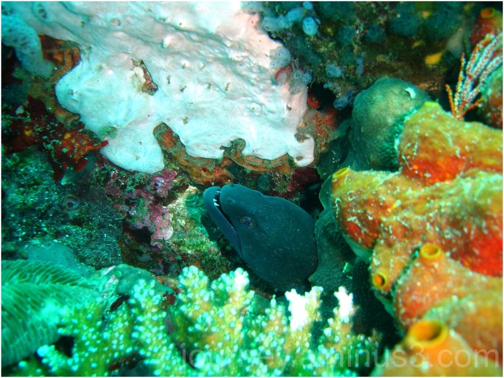 Puerto Galera Eel