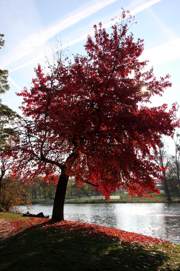 paris jardin arbre nature