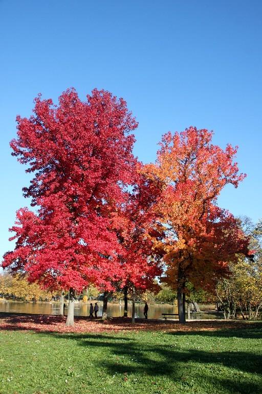 Paris automne nature bois-Vincennes