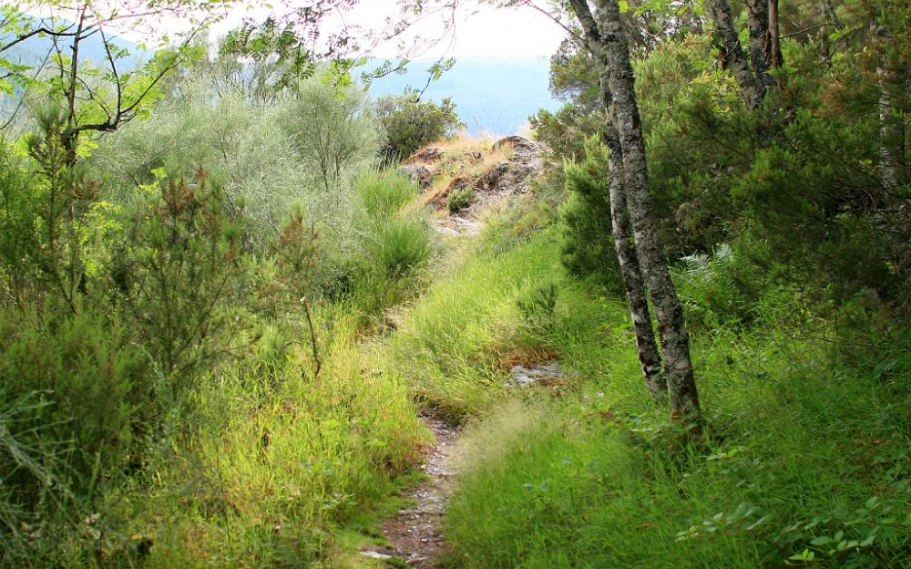 Siguiendo el sendero