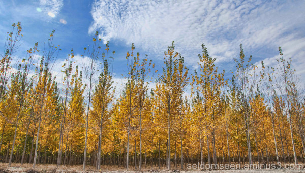 Boardman Tree Farm 2