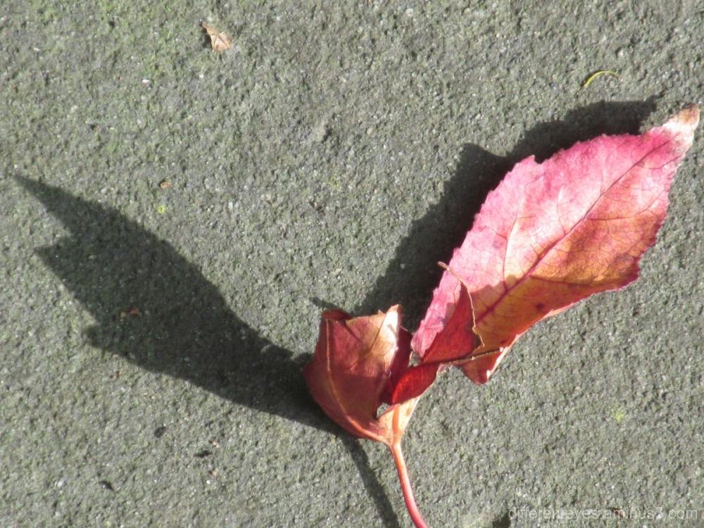 autumn leaf and shadows