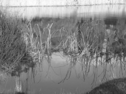 wetlands in monochrome...