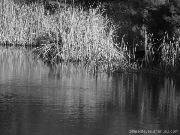 more wetlands in monochrome