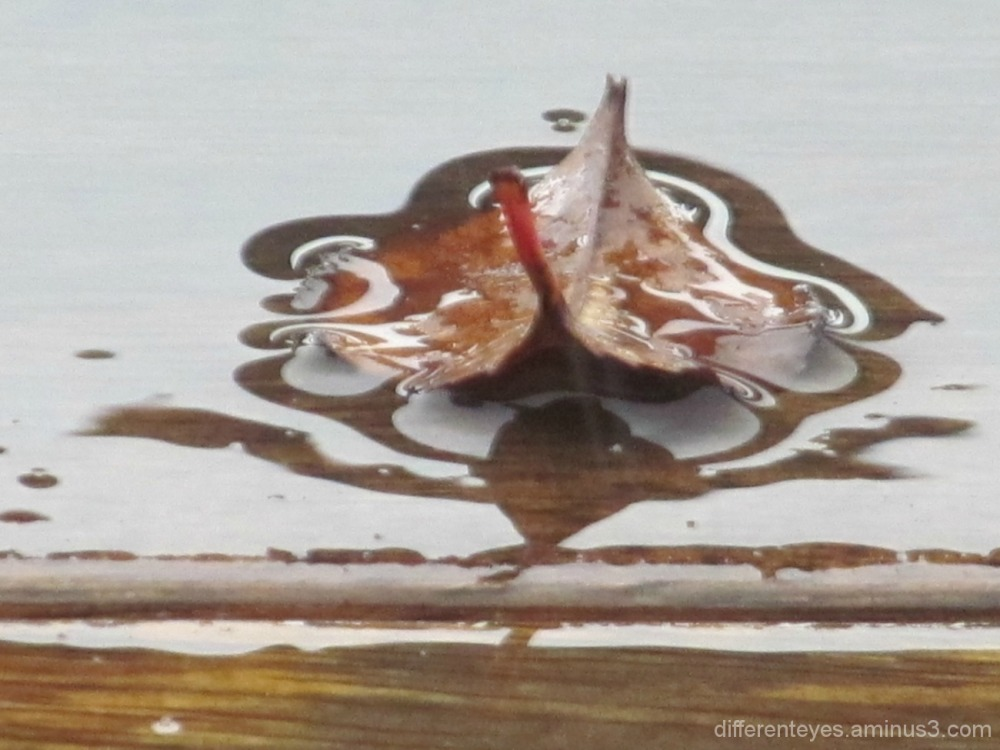 macro of leaf in the rain