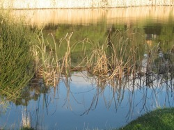 winter wetlands (4)...