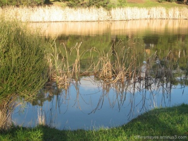 Hillview Community Reserve wetlands in winter