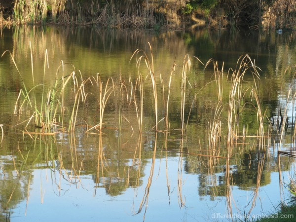 winter wetlands (6)...