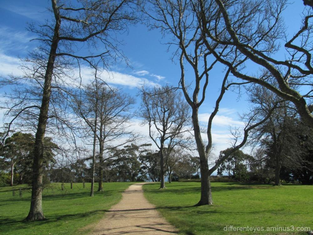 trees lining a Seawinds walkway Arthurs Seat