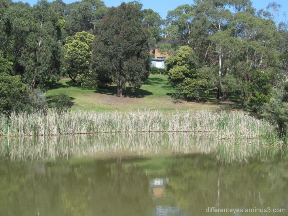 view of Dromana wetlands