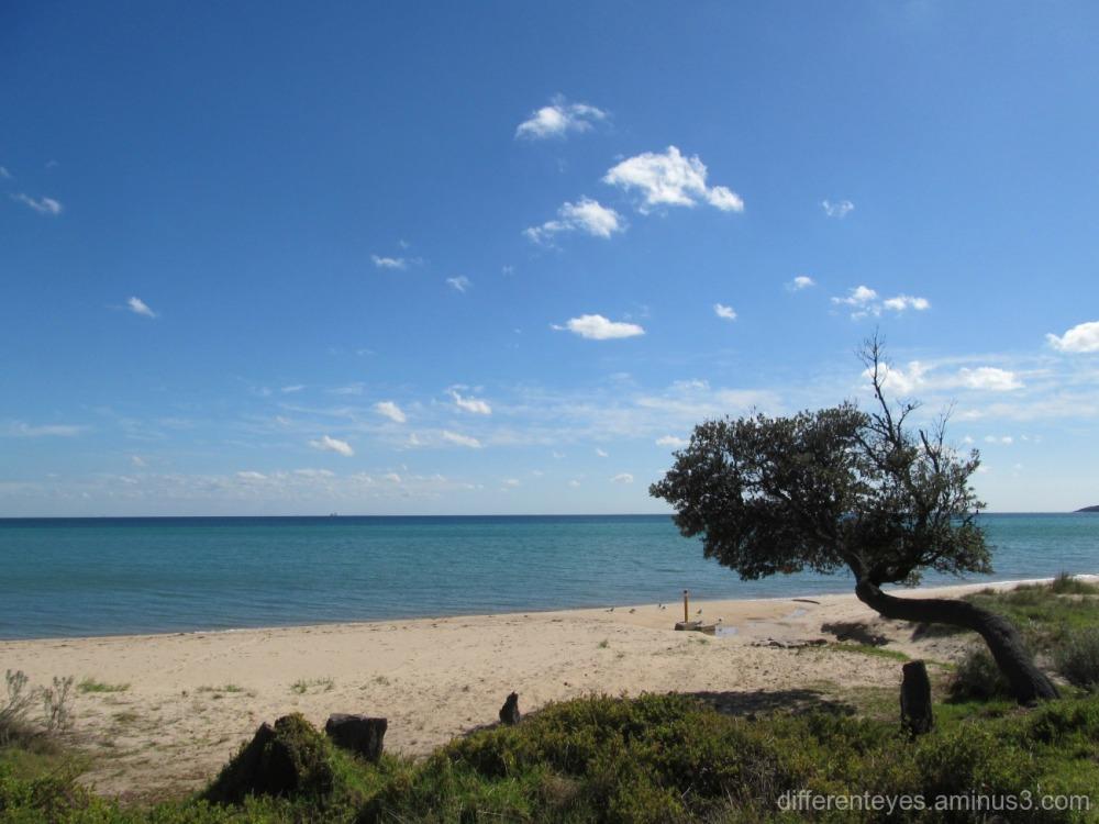 view of Dromana beach in Autumn