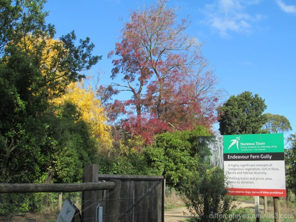 autumn at Red Hill