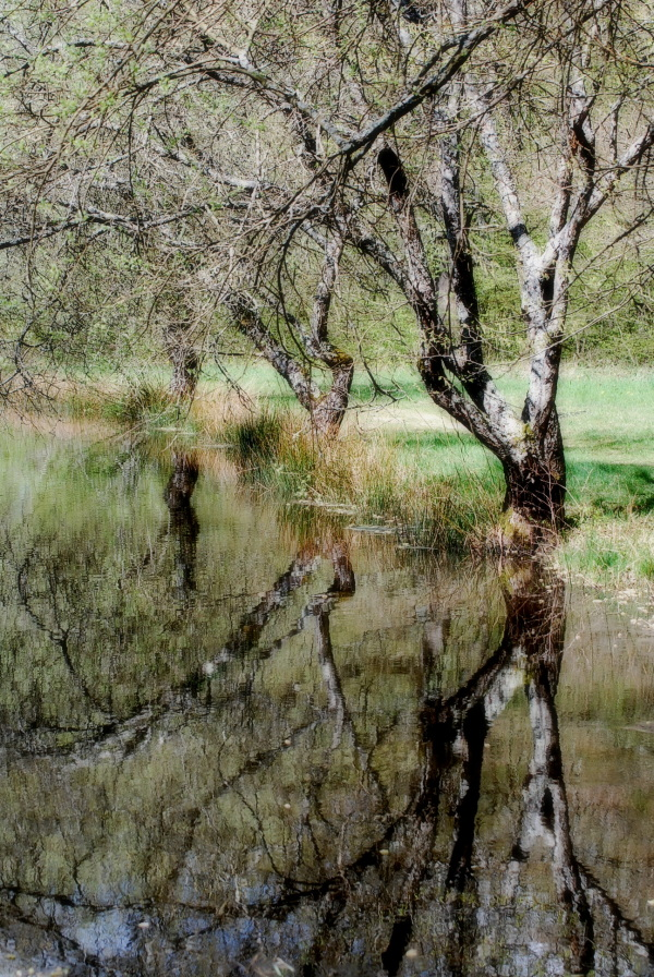 Reflets d'arbres au printemps