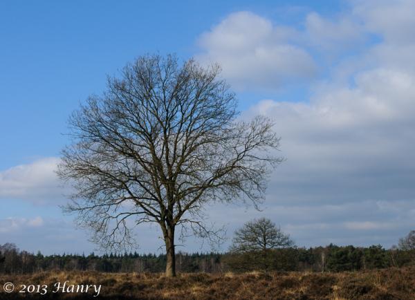 lage vuursche boom heide tree moorland heath