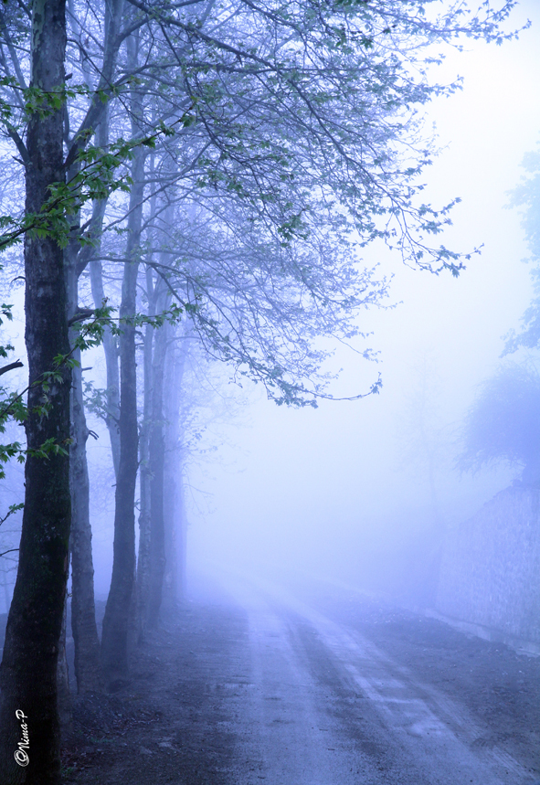 the way in fog