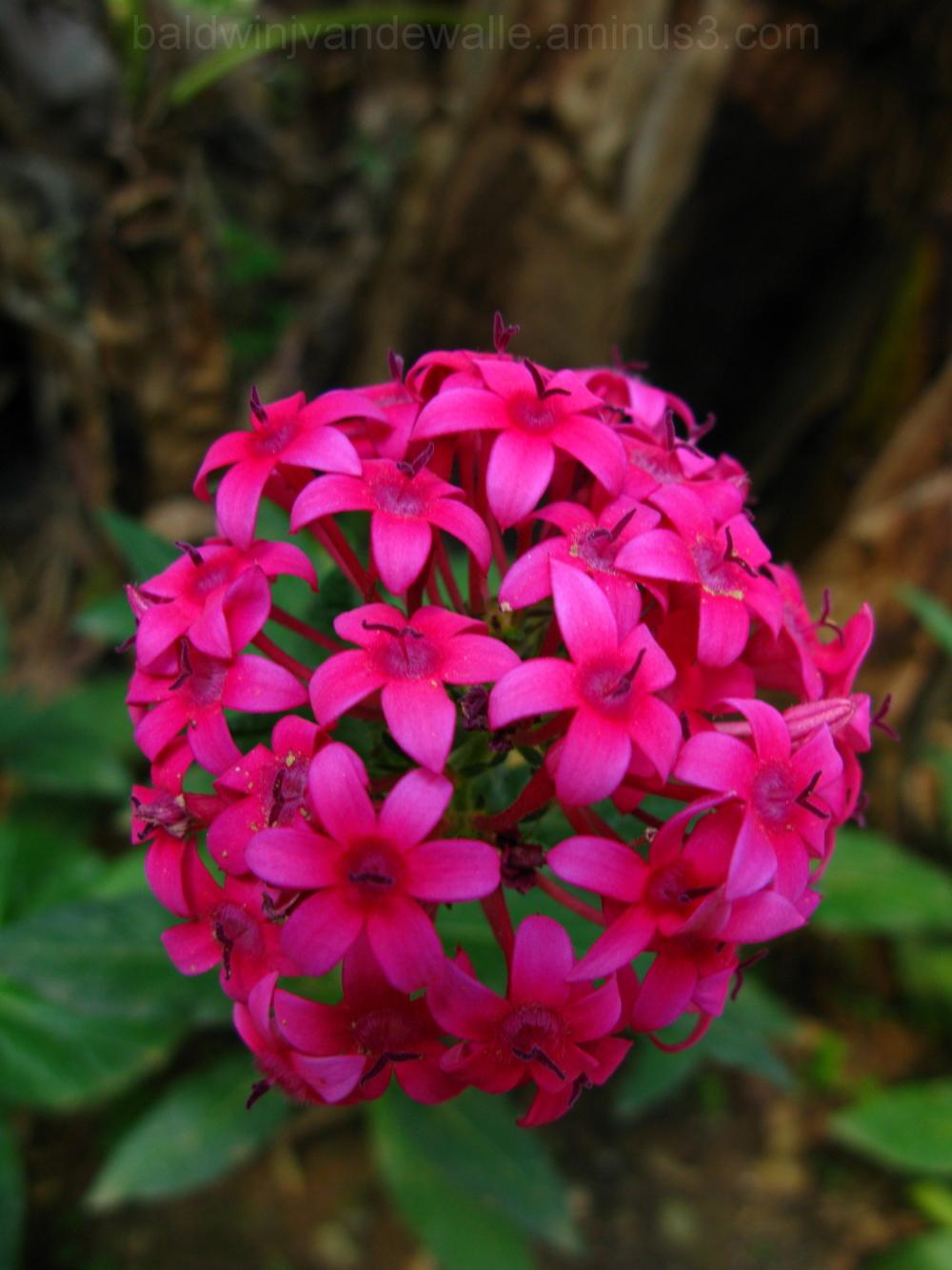 Flower II...