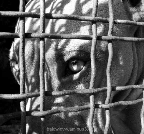 Through the fence ...