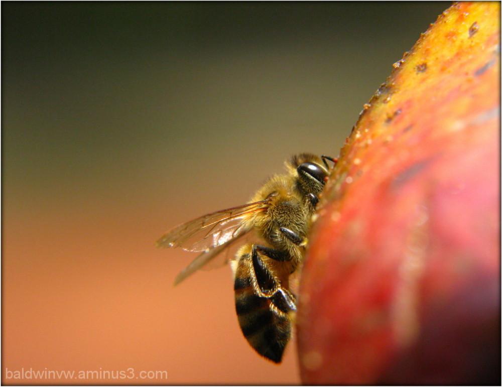 Bee-sy ...